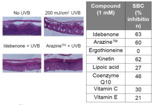 艾地苯醌有效抑制UVB引起的SBC(晒伤细胞)